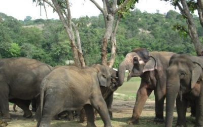 Free Roam Elephant Sanctuary in Brazil Part II