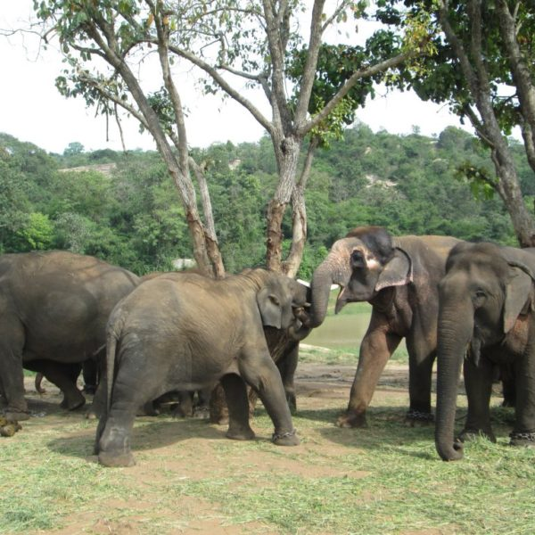 Free Roam Elephant Sanctuary in Brazil Part IIGuests:Scott Blais, CEO and Board President
